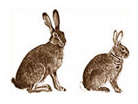 hare-and-rabbit