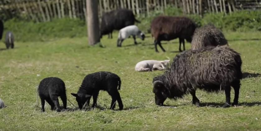 Rules & Lavinton Lamb